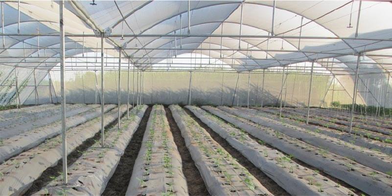 Cultivar verduras en la sombra
