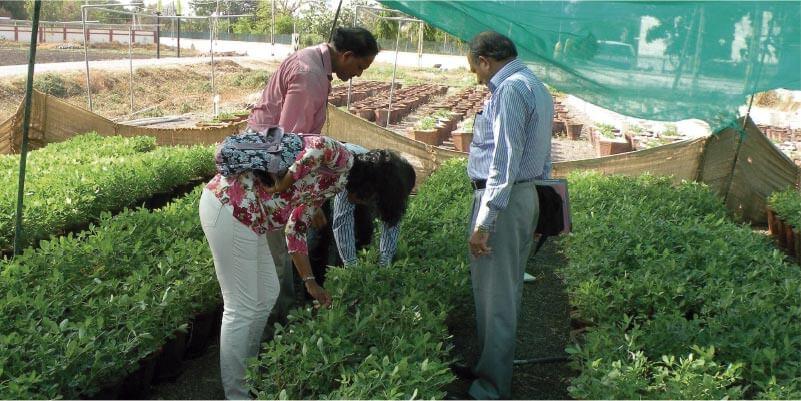 Cultivo de plantas en sombra