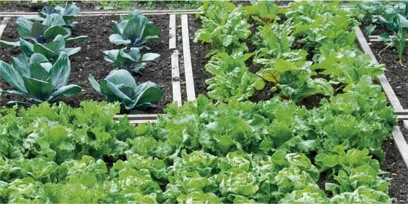 Cultivos de semisombra