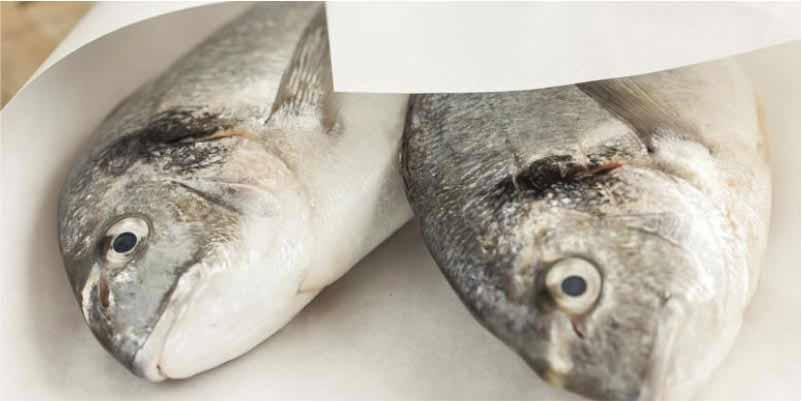 Papel para pescaderías