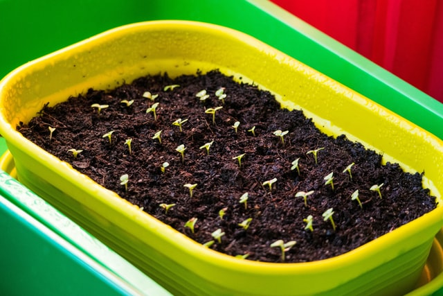 Errores en la preparación de semilleros