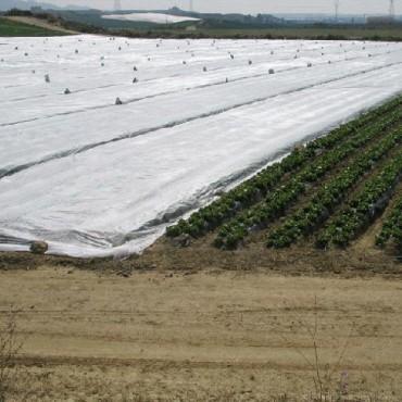 manta termica cubriendo cultivos