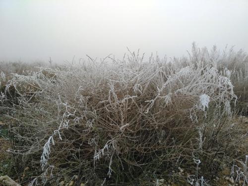 planta helada con niebla